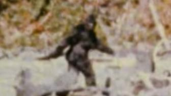 A clip from the 1967 Patterson-Gimlin film, believed to be the most compelling evidence of the existence of Bigfoot.