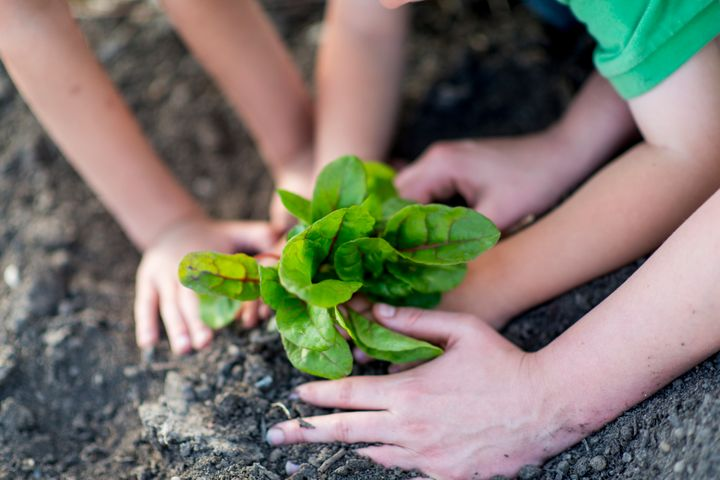 """Small gardens can help raise community awareness about how plants grow and what """"real food"""" looks like."""