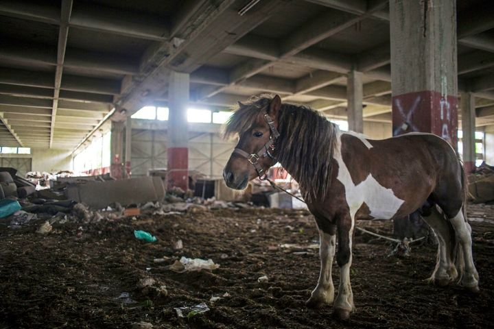 A pony stands in the middle of a warehouse in the neglected district of Eleonas, a few yards away from the camp for refugees