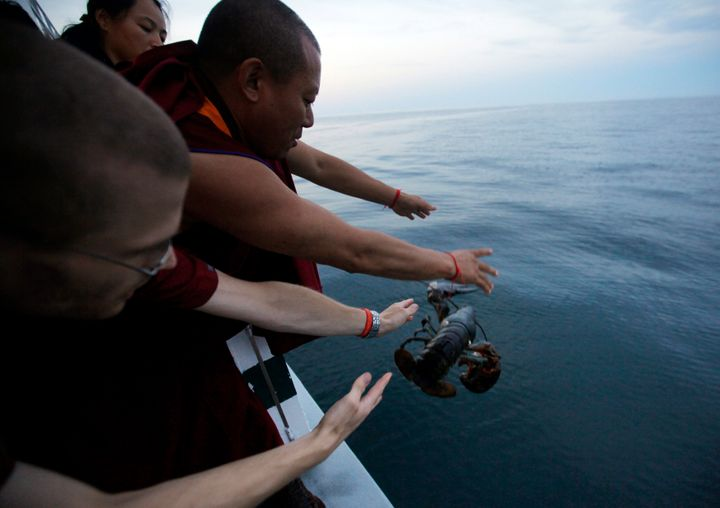 Buddhist monks, including Geshe Tenley and Tsultrim Davis (pictured), similarly released 600 pound of lobster off the co