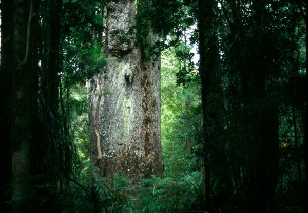 """New Zealand is onebig, prehistoric fairy tale, with <a href=""""http://www.huffingtonpost.in/perzen-patel/5-places-in-sout"""
