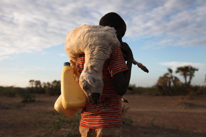KALOKOL, KENYA - NOVEMBER 30, 2015: Ekai Lopeyak walks home carrying the body of one of his family's goats, which he found de