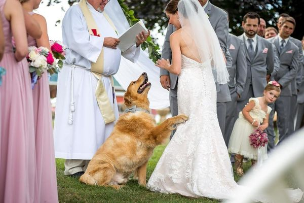 """""""The groom's father could not be at the wedding, but his cherished golden retriever was able to give the blessing in hi"""
