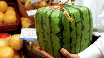 390955 07: A square watermelon is on display for sale in a department store June 22, 2001 in Tokyo, Japan. The watermelons, which are grown by farmers in a square glass frame, are sold for 10,000 yen, some $82 as compared to the average price for watermelons of $15 to $25 each. (Photo by Koichi Kamoshida/Getty Images)