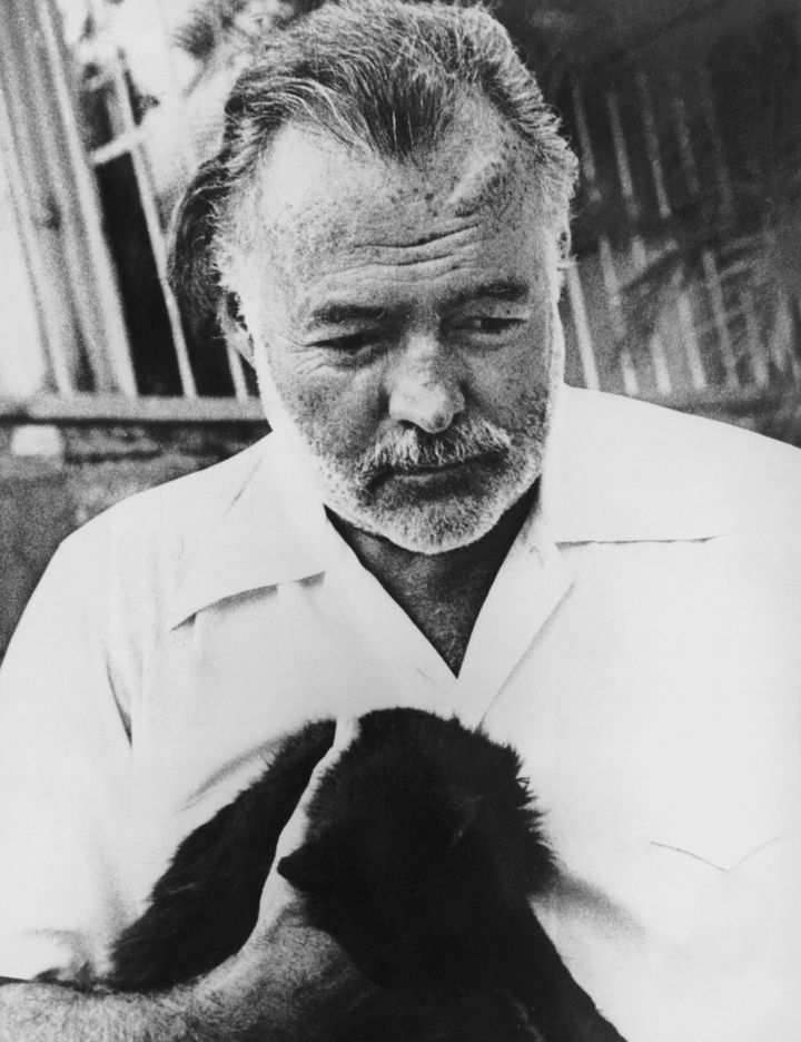 American novelist and journalist Ernest Hemingway (1899 - 1961) with his pet cat, circa 1950.
