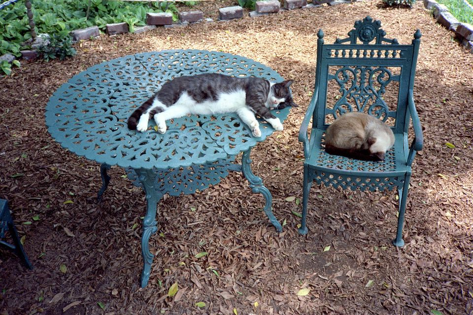 No patio set is complete without a few good cat