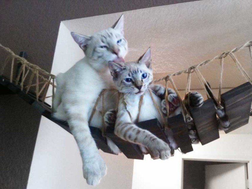 this couple builds cat furniture thatu0027s nicer than everything you own huffpost