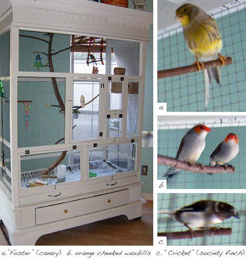 <i>An armoire is reconstructed to become a bird-cage.</i>