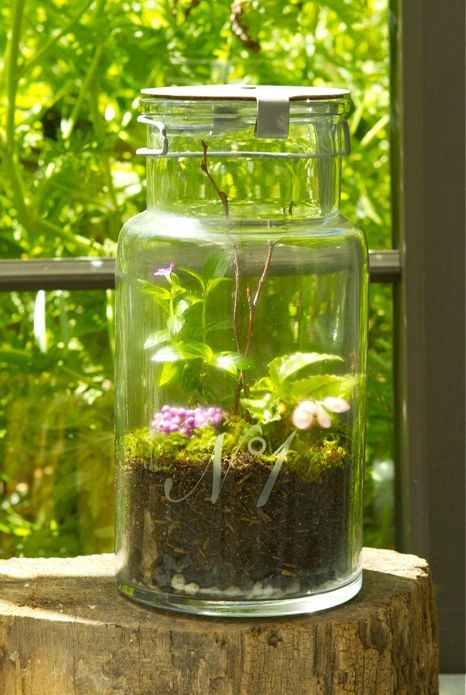 <i>Terrariums fit in&nbsp;a variety of&nbsp;glass jars.</i>