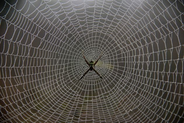 Soldiers Could Soon Be Wearing Armour Made From Genetically Engineered Spider