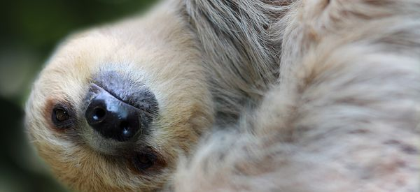 Take This Test To Find Out Your 'Sleeping Spirit Animal'