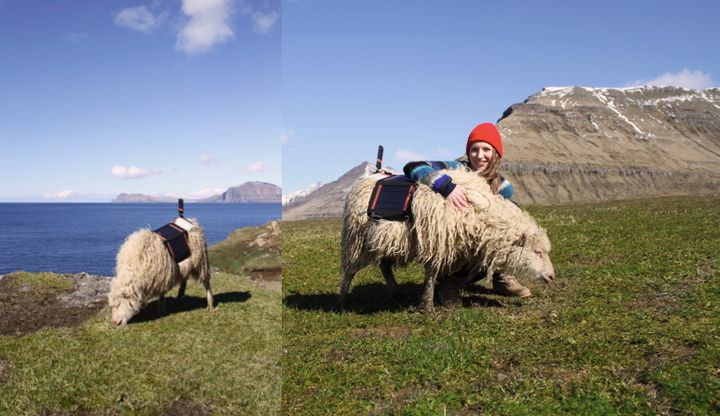 Durita Dahl Andreassen of Visit Faroe Islands is seen with one of the sheep used to document the islands' terrain with 360-de