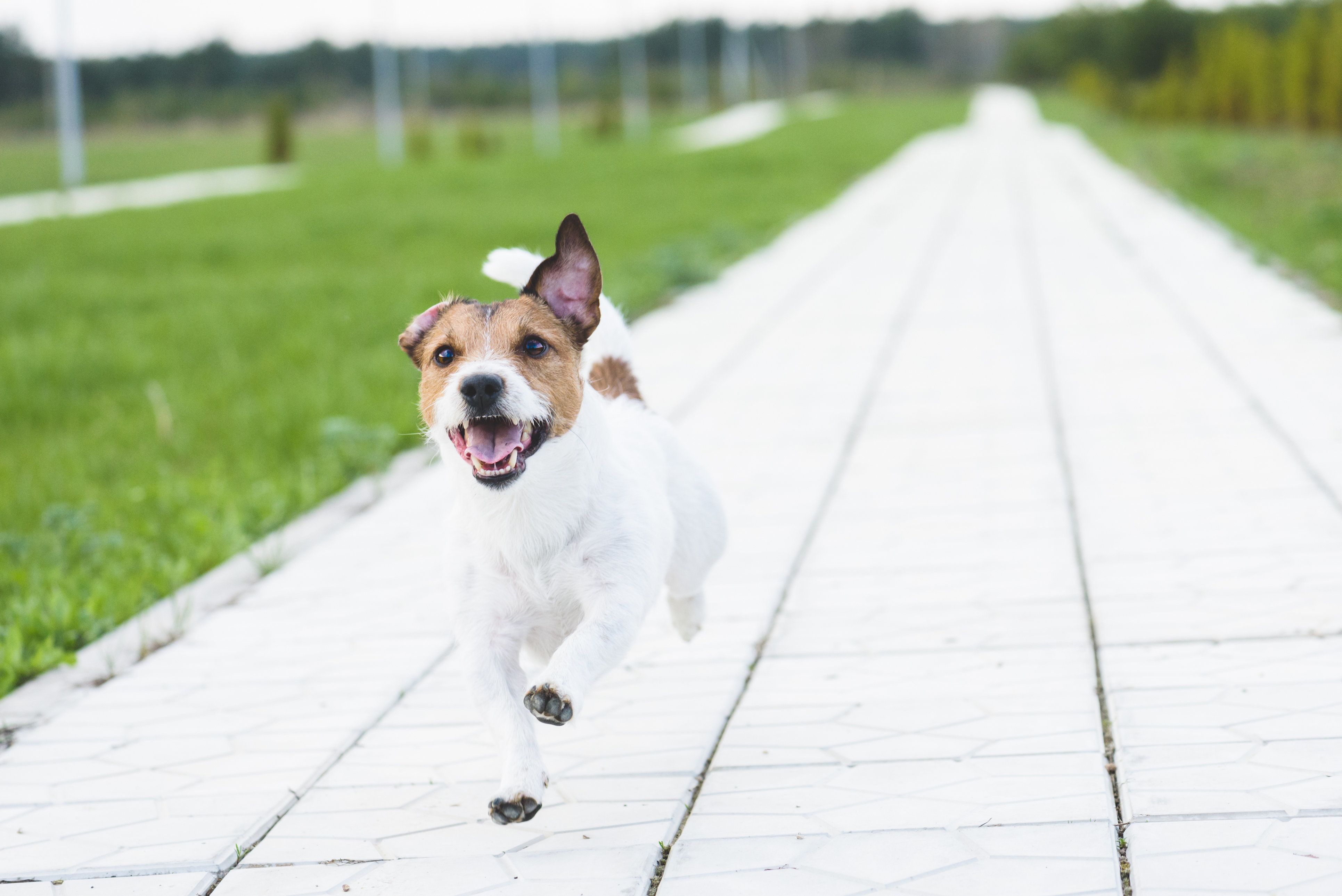 How To Catch A Dog Off Its Lead: Pet Owners Share Their Pearls Of