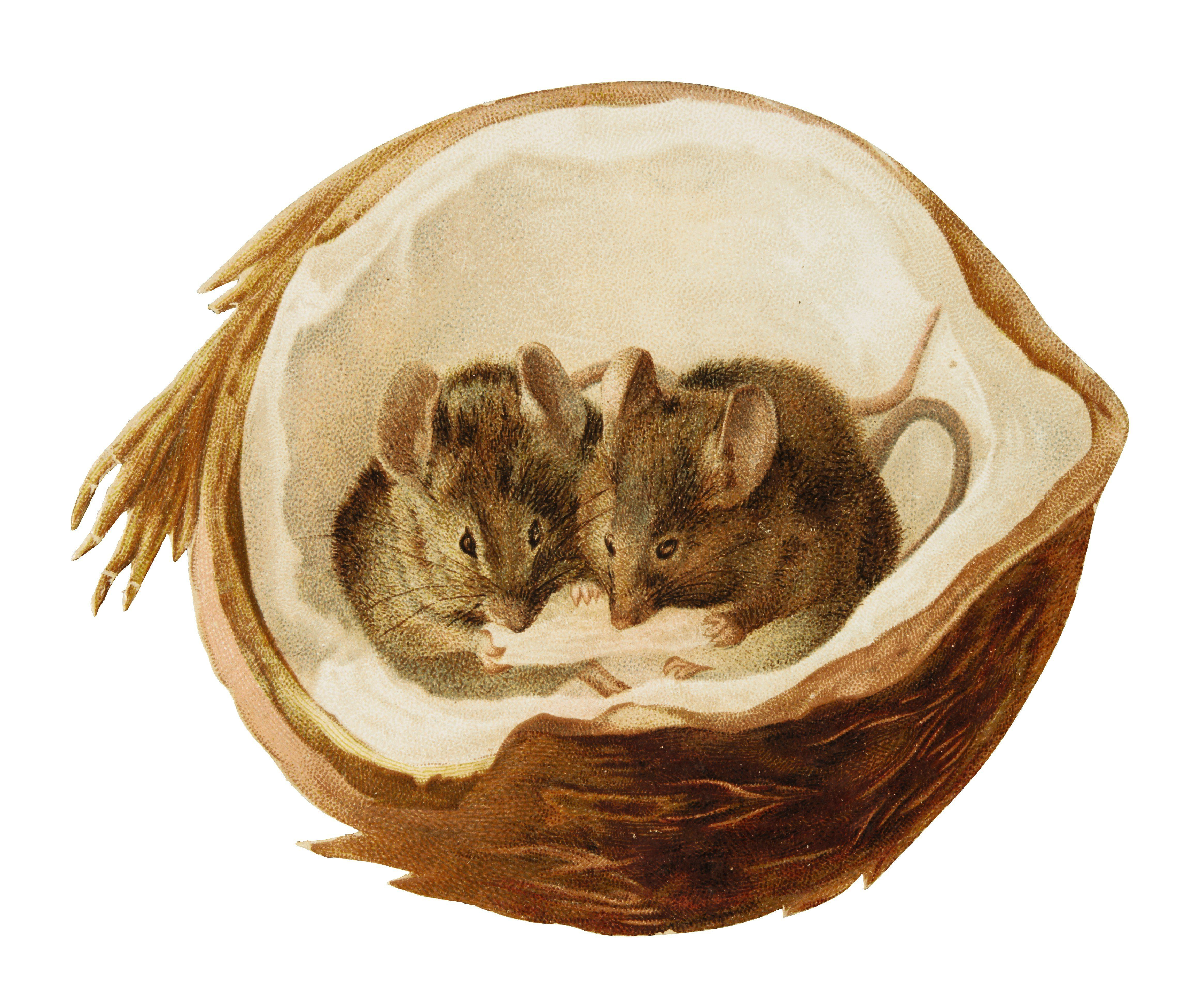 """A """"Mice in a Coconut""""[Hildesheimer and Faulkner, c.1891] card, featuring some of Beatrix Potter's earliest printed work"""