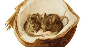 """MICE IN A COCONUT. [HILDESHEIMER AND FAULKNER, C.1891] two shaped chromolithograph cards, 142 by 101mm (folding) and 80 by 101mm, printed messages (""""A happy Christmas to you"""" and """"A merry Christmas and a happy New Year""""), second card with annotation """"This is a card I found at Sawrey by Cousin B. I think it's rather a darling..."""", slight wear to extremities (2)"""