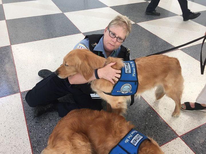 Comfort dogs providing cuddles.
