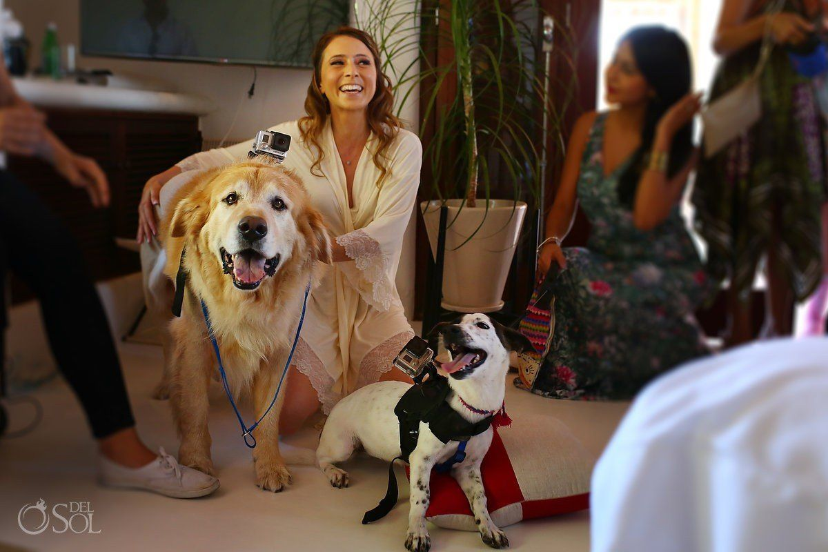 """The bride, who lives in London, was overjoyed when her wedding """"video-dog-ruffers"""" came prancing in."""