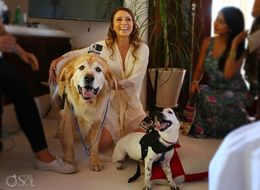 Rescue Pups Film A Wedding With GoPros, And It's Too Doggone Cute