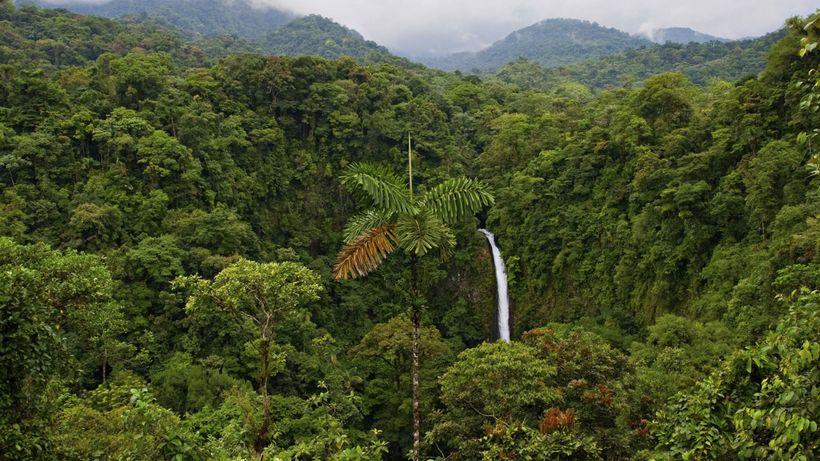 <i>Costa Rican rainforest</i>