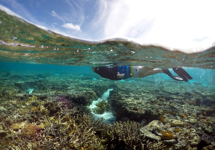 A tourist snorkels above coral in the lagoon located on Lady Elliot Island on the Great Barrier Reef.