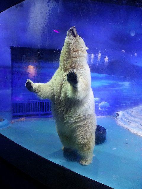 This Polar Bear Hybrid Is 'Suffering For Selfies' Inside The 'World's Saddest