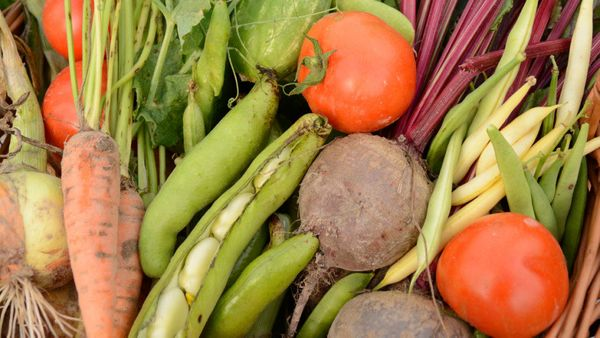"""""""Too many people throw away parts of produce that are edible,"""" says Dana Gunders, a senior scientist in the Natural Resources"""