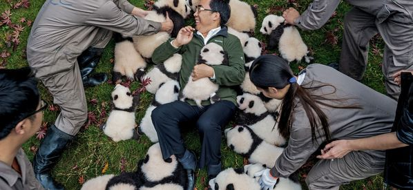 Painfully Adorable Panda Cub Photos Will Make You Want One Of Your Own