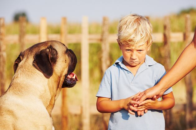 More Than A Third Of Kids Are Scared Of Dogs, But Parents ...