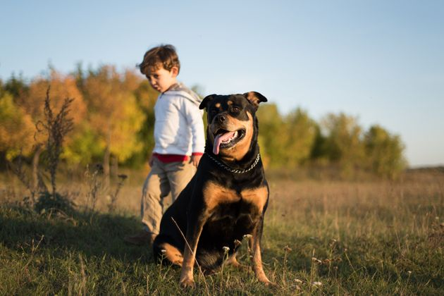 More Than A Third Of Kids Are Scared Of Dogs, But Parents Can 'Manage The Fear' With Dogs Trust