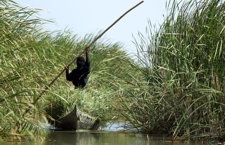 An Iraqi woman collects grass with a canoe in the Chibayish marshes near the southern Iraqi city of Nasiriyah on June 25, 201