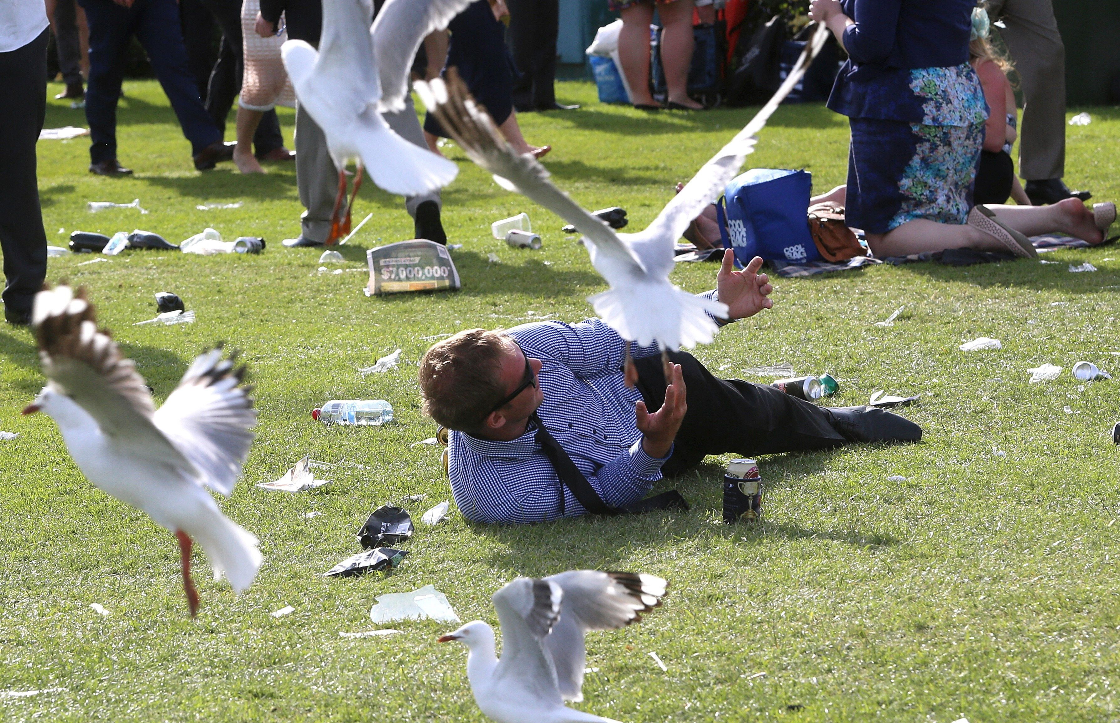 Brits Warned Of Seagulls Across The UK 'Tripping On