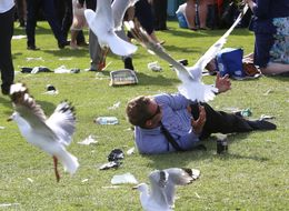 Brits Warned Of Seagulls Across The UK 'Tripping On Acid'