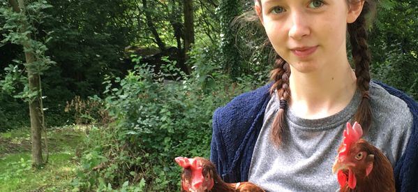 This Teenager Just Got Tesco To Stop Selling Eggs From Caged Hens