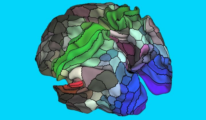 The new map of the human cortex contains 180 distinct areas in each hemisphere.