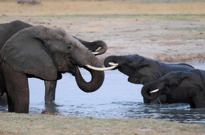 A herd of elephants gather at a watering hole in Hwange National Park October 14, 2014. The watering hole was one of several