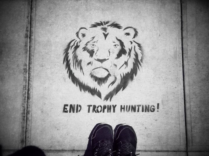 A stenciled sign protesting trophy hunting is seen on the streets of Santa Barbara, California, several months after Cecil th