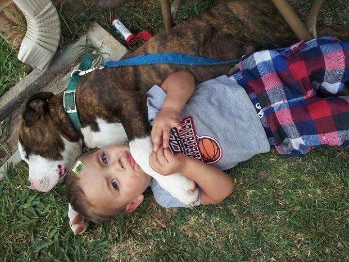 Opie as a puppy, snuggling with one of the family children.