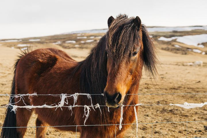 """<p><a rel=""""nofollow"""" href=""""http://www.thetravelpockets.com/new-blog/2016/4/7-day-iceland-road-trip-itinerary"""" target=""""_blank"""">THE FRIENDLY ICELANDIC HORSE</a></p>"""