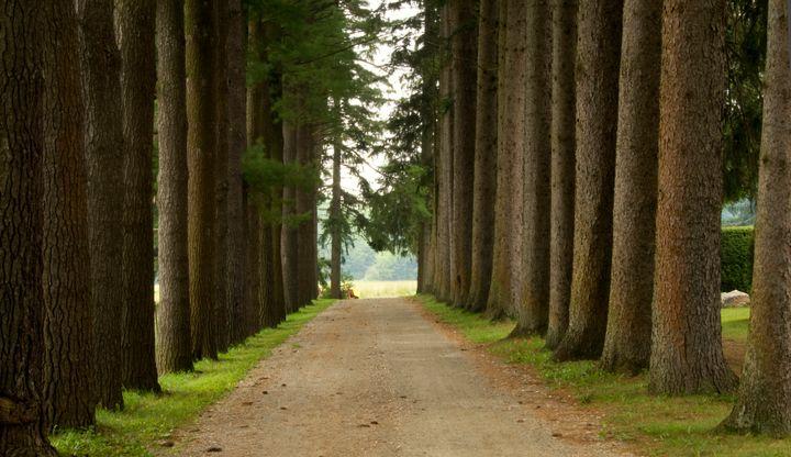 A line of trees near Stockbridge, Massachusetts.