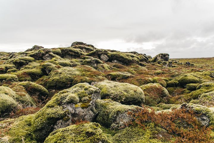 """<p><a rel=""""nofollow"""" href=""""http://www.thetravelpockets.com/new-blog/2016/4/7-day-iceland-road-trip-itinerary"""" target=""""_blank"""">LAKI LAVA FIELDS</a></p>"""