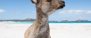 LUCKY BAY AUSTRALIAN COAST WHITE SAND