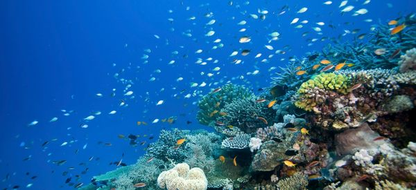 Tragically, Huge Sections Of The Great Barrier Reef Are Suffering 'Complete Ecosystem Collapse'
