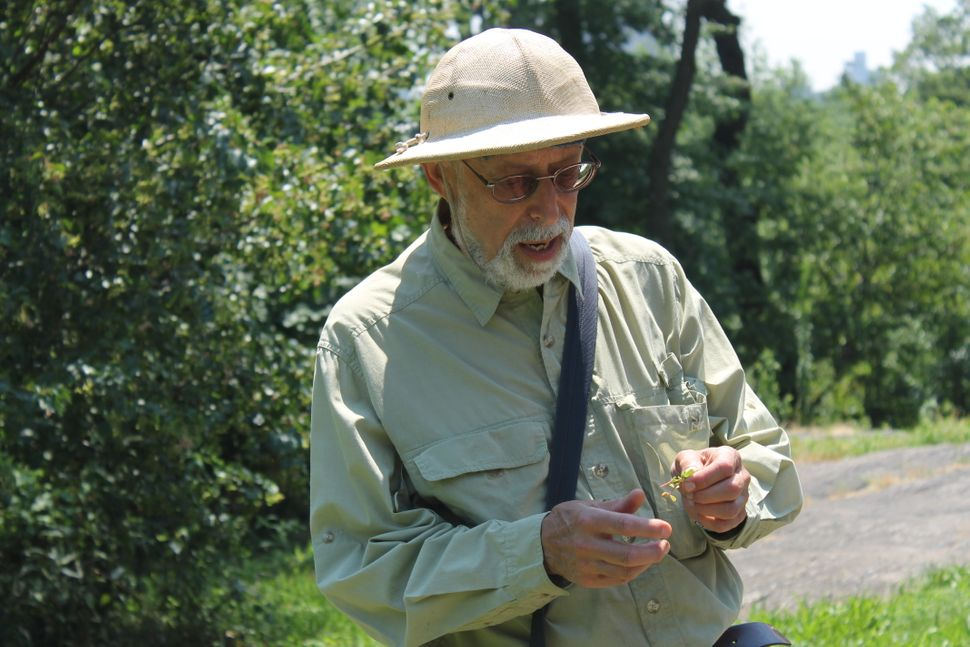 """Wildman"" Steve Brill has been foraging in New York for three decades."
