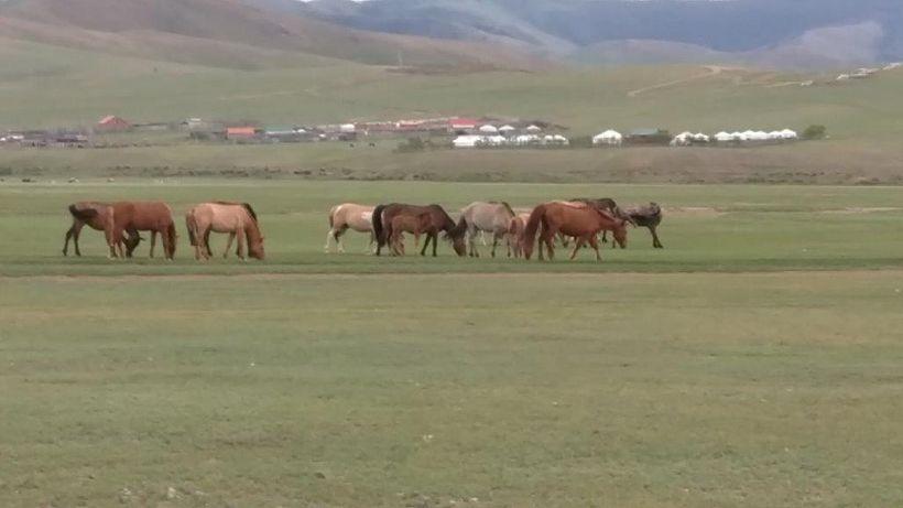 Unfettered horses graze on the plains