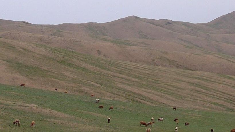 Herds of sheep and goats graze freely