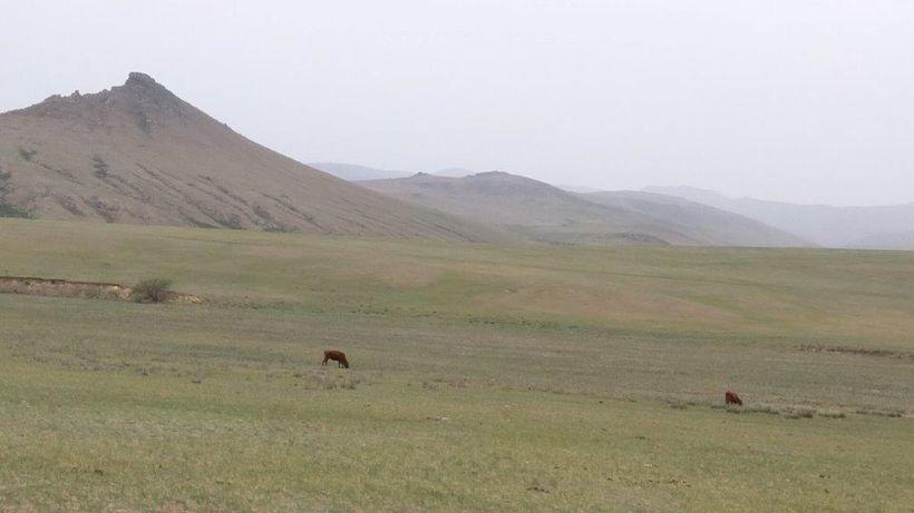 Animals graze unattended