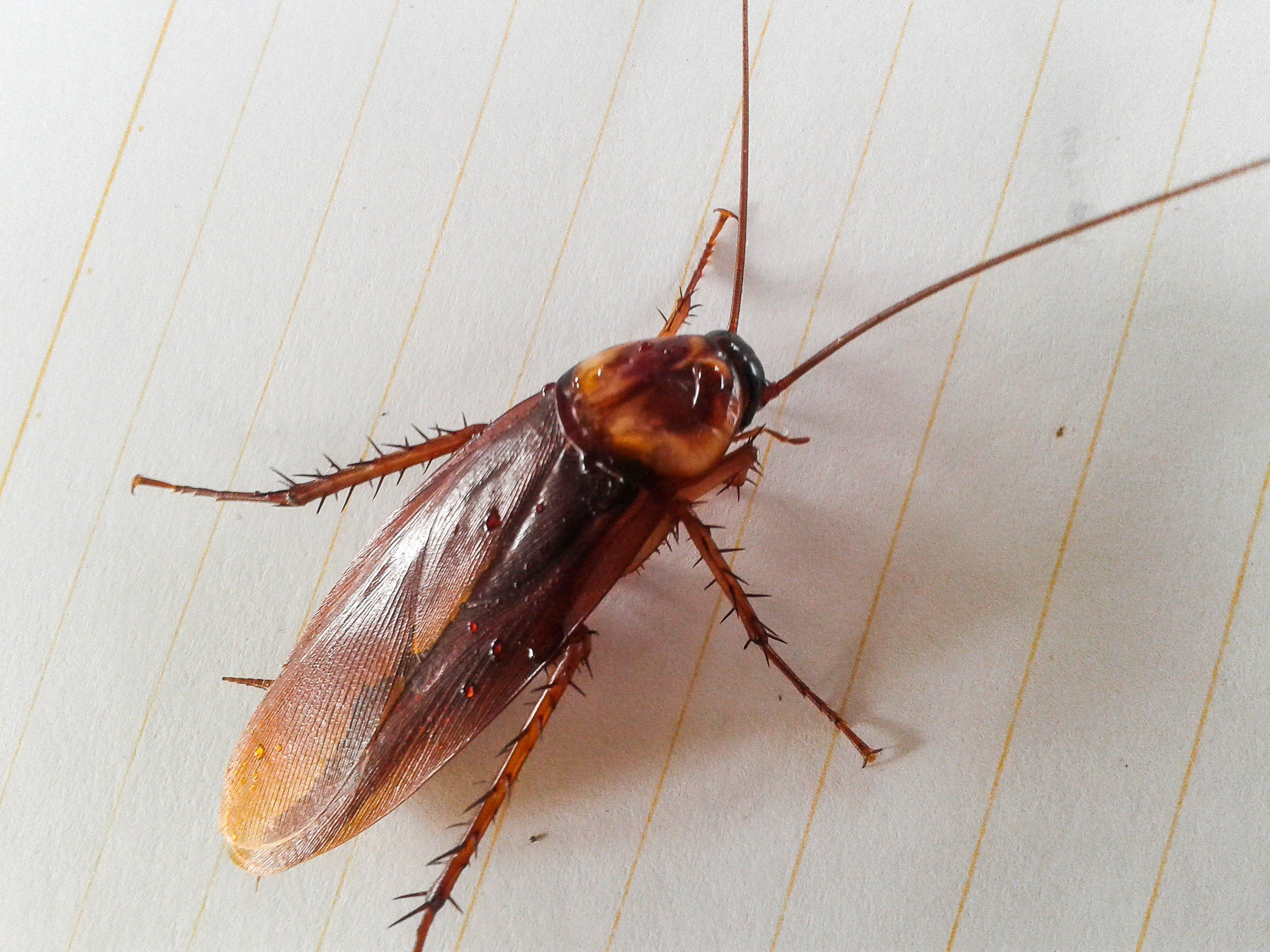 cockroach on white paper