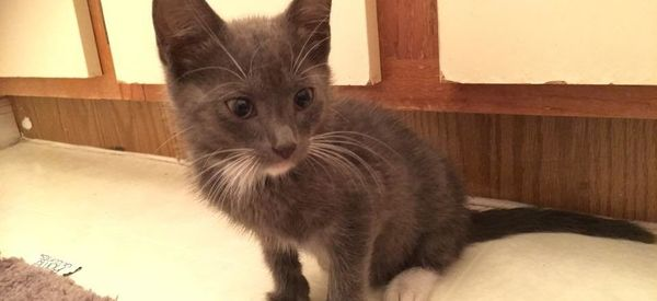 'Pokemon Go' Leads Woman To Stray Injured Kitten Who Needs Her Help