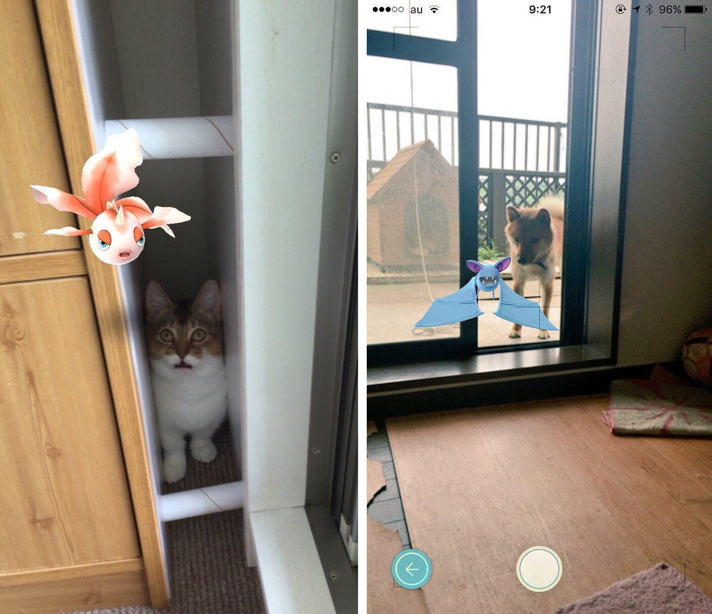 Pokemon Go Players Are Convinced Their Pets Can See Pokemon In Real