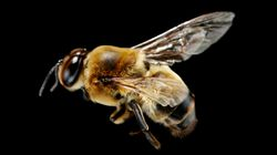 The World's Most Popular Insecticide Could Be Making Male Bees